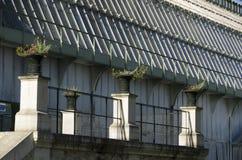 Βοτανική στο Εθνικό Μουσείο της φυσικής ιστορίας στοκ φωτογραφίες