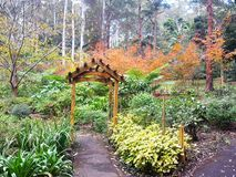 Βοτανικοί κήποι βουνών Tamborine Στοκ εικόνα με δικαίωμα ελεύθερης χρήσης