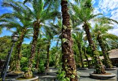 Βοτανικοί κήποι της Σιγκαπούρης, κόλπος μαρινών, Σιγκαπούρη Στοκ Εικόνα