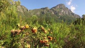 Βοτανικοί κήποι Kirstenbosch - Καίηπ Τάουν απόθεμα βίντεο