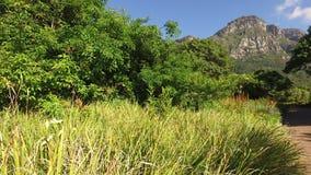 Βοτανικοί κήποι Kirstenbosch - Καίηπ Τάουν φιλμ μικρού μήκους