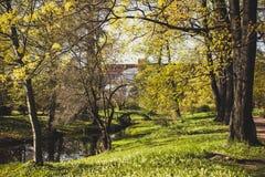 Βοτανικός κήπος Αγίου Πετρούπολη Πετρούπολη Άγιος Στοκ Εικόνα