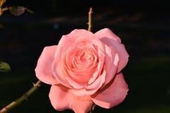 Βοτανικός κήπος Μόντρεαλ στοκ εικόνες