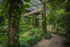 Βοτανικός κήπος Νότιων Κινών στοκ εικόνα