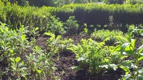 βοτανικός κήπος στην άνοιξη φιλμ μικρού μήκους