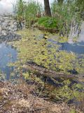 Βοτανικός κήπος στο awice WojsÅ 'δενδρολογικών κήπων Στοκ εικόνες με δικαίωμα ελεύθερης χρήσης