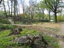 Βοτανικός κήπος στο awice WojsÅ 'δενδρολογικών κήπων στοκ εικόνα