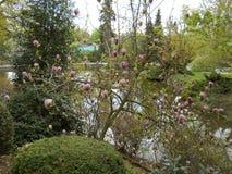 Βοτανικός κήπος στο awice WojsÅ 'δενδρολογικών κήπων Στοκ Φωτογραφία