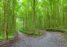 Βοτανικός κήπος του Μπαλί στοκ εικόνα με δικαίωμα ελεύθερης χρήσης