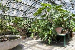 Βοτανικός κήπος του Παλέρμου Στοκ Εικόνα