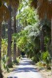 Βοτανικός κήπος του Παλέρμου στοκ εικόνες με δικαίωμα ελεύθερης χρήσης