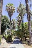 Βοτανικός κήπος του Παλέρμου στοκ εικόνες