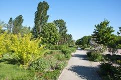 βοτανικός κήπος Στοκ Εικόνες