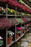βοτανικός κήπος Στοκ Φωτογραφίες