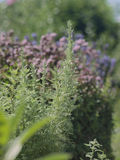 Βοτανικός κήπος Στοκ φωτογραφίες με δικαίωμα ελεύθερης χρήσης
