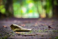 Βοτανικός κήπος Purwodadi, Pasuruan, Ινδονησία Στοκ φωτογραφίες με δικαίωμα ελεύθερης χρήσης