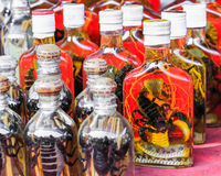 Βοτανικό ποτό το σκορπιό, το φίδι και το χορτάρι που ενυδατώνονται από στο οινόπνευμα Στοκ φωτογραφία με δικαίωμα ελεύθερης χρήσης