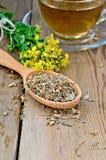 Βοτανικό τσάι από tutsan ξηρός και φρέσκος στο κουτάλι Στοκ εικόνα με δικαίωμα ελεύθερης χρήσης