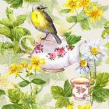 Βοτανικό τσάι - δοχείο, φλυτζάνι και πουλί επανάληψη προτύπων watercolor Στοκ φωτογραφία με δικαίωμα ελεύθερης χρήσης