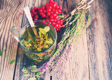 Βοτανικό τσάι σε μια διαφανή κούπα γυαλιού, τα μούρα ενός guelder-τριαντάφυλλου και τα δασικά χορτάρια Στοκ Εικόνες