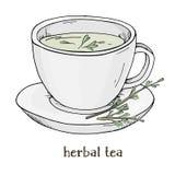 βοτανικό τσάι φλυτζανιών Διανυσματική απεικόνιση στο ύφος σκίτσων ελεύθερη απεικόνιση δικαιώματος