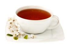 βοτανικό τσάι φλυτζανιών Στοκ Εικόνες