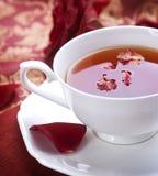 βοτανικό τσάι στοκ εικόνες με δικαίωμα ελεύθερης χρήσης