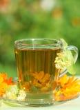 βοτανικό τσάι Στοκ Φωτογραφία