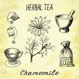 Βοτανικό τσάι Chamomile Σύνολο στοιχείων στα σχέδια μολυβιών χεριών βάσης Στοκ Εικόνες