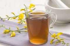 βοτανικό τσάι sphaerocarpa retama στοκ εικόνα