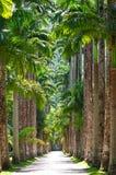 βοτανικό janeiro Ρίο de garden στοκ φωτογραφίες