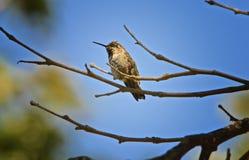 Βουίζοντας κλάδος δέντρων πουλιών στοκ εικόνα με δικαίωμα ελεύθερης χρήσης