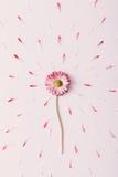 Βουίζοντας λουλούδι μαργαριτών Στοκ εικόνες με δικαίωμα ελεύθερης χρήσης
