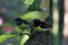 Βουίζοντας πουλί που εξετάζει το/βουίζοντας πουλί που φαίνεται συγκεχυμένο στοκ φωτογραφία με δικαίωμα ελεύθερης χρήσης