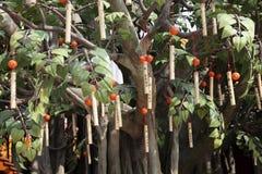 βουδιστικό δέντρο προσε Στοκ φωτογραφίες με δικαίωμα ελεύθερης χρήσης