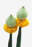 βουδιστικό λουλούδι θ στοκ εικόνα