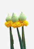 βουδιστικό λουλούδι θ στοκ εικόνες