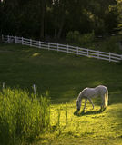 βουκολικό ποίημα αλόγων που θέτει άσπρο Στοκ φωτογραφία με δικαίωμα ελεύθερης χρήσης