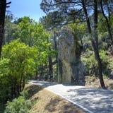 Βουλώνει τα δέντρα Ανδαλουσίας, Ισπανία στοκ εικόνες