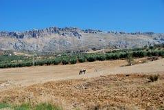 βουνά Ισπανία πεδίων της Ανδαλουσίας almogia Στοκ φωτογραφία με δικαίωμα ελεύθερης χρήσης