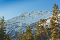 βουνά και δέντρα χιονιού Στοκ Εικόνα