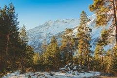 βουνά και δέντρα χιονιού Στοκ Φωτογραφίες
