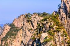 Βουνά και δέντρα Huangshan στοκ φωτογραφίες