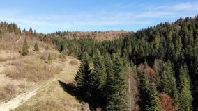 Βουνά και δάση Carpathians Ομαλή μύγα μπροστινή απόθεμα βίντεο