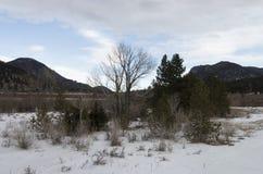 Βουνά και δέντρα στο χειμώνα Στοκ Εικόνες