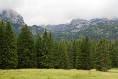 Βουνά και ερυθρελάτες κοντά στη μαύρη λίμνη στο Μαυροβούνιο Στοκ Εικόνες