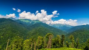 Βουνά και πράσινα δέντρα στο χρονικό σφάλμα πρώτου πλάνου απόθεμα βίντεο
