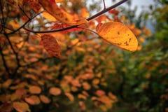 Βουνά και φύλλα στοκ φωτογραφίες