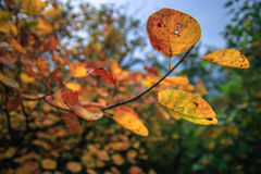 Βουνά και φύλλα Στοκ Φωτογραφία