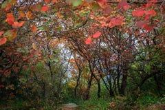 Βουνά και φύλλα στοκ εικόνες με δικαίωμα ελεύθερης χρήσης